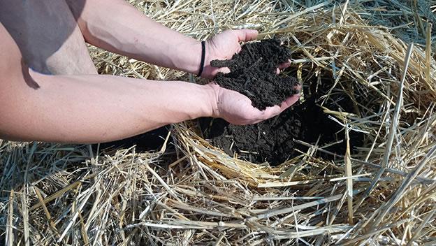 Soil Building
