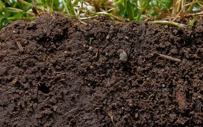 Why Soil Microorganisms are Vital to Your Gut Health