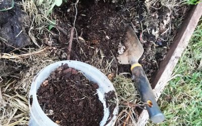 Tips for Composting and Making Healthy Soil