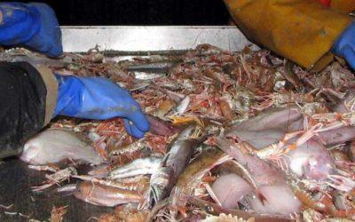 Turn Fish Discards into the Best Bio-Fertiliser