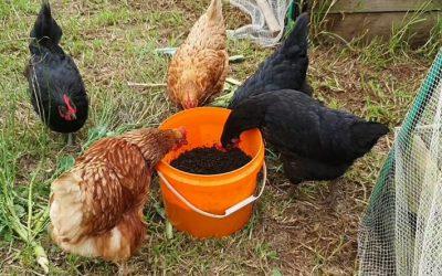 No Waste Natural Farming